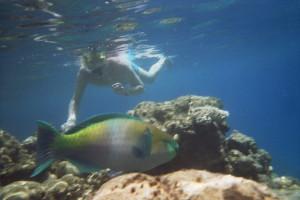 ---_Peter duikt in Egypte